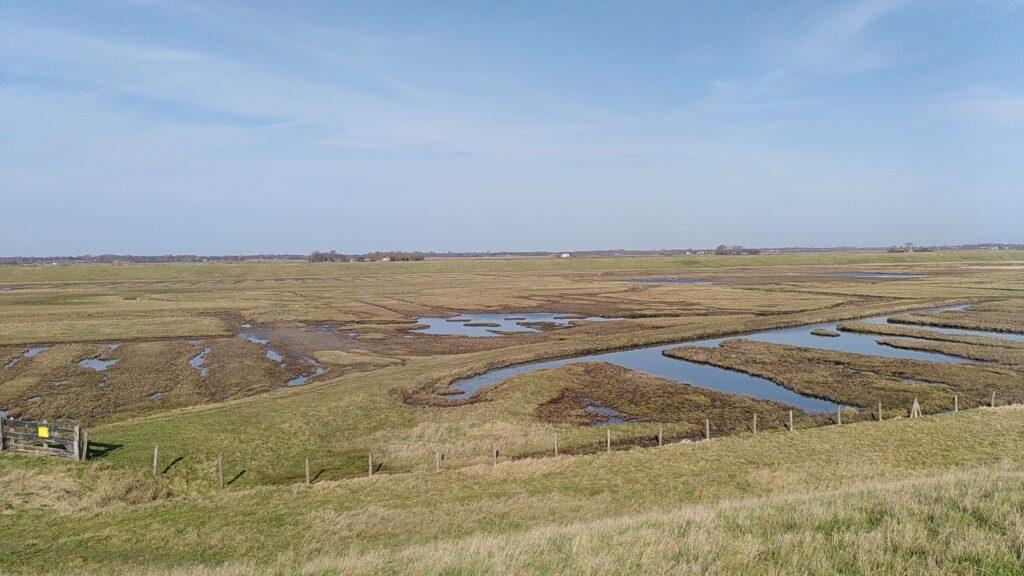 Zoute kwel achter een dijk in Zeeland (eigen foto PMC)